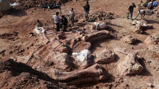 এযাবৎকালের সবচেয়ে বড় ডাইনোসরের ফসিল আবিস্কার