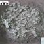 ডাইনোসরের বাচ্চা লালনপালনে বেবিসিটারের সন্ধান