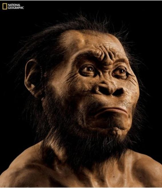 হোমো নালেডি সম্ভবত আদিম দু'পেয়ে প্রাইমেট ও আধুনিক মানুষের মধ্যবর্তী কোনো প্রজাতি