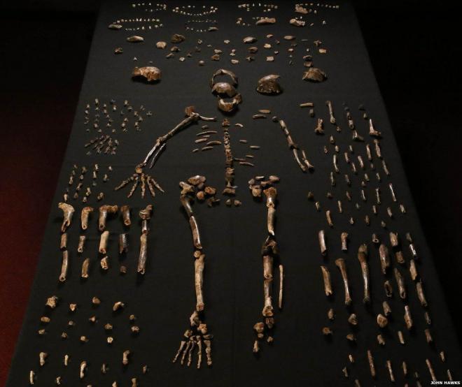 মানবসদৃশ নতুন প্রজাতির সন্ধান: পাল্টে যেতে পারে মানুষের আদি ইতিহাস